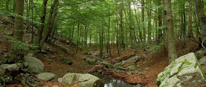 Recerca al bosc